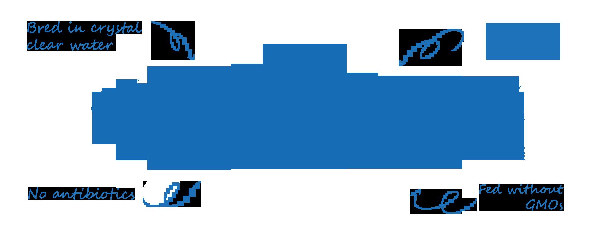 Ryba rysunek eng